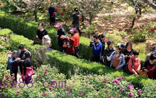 2012年中川牡丹节会图片