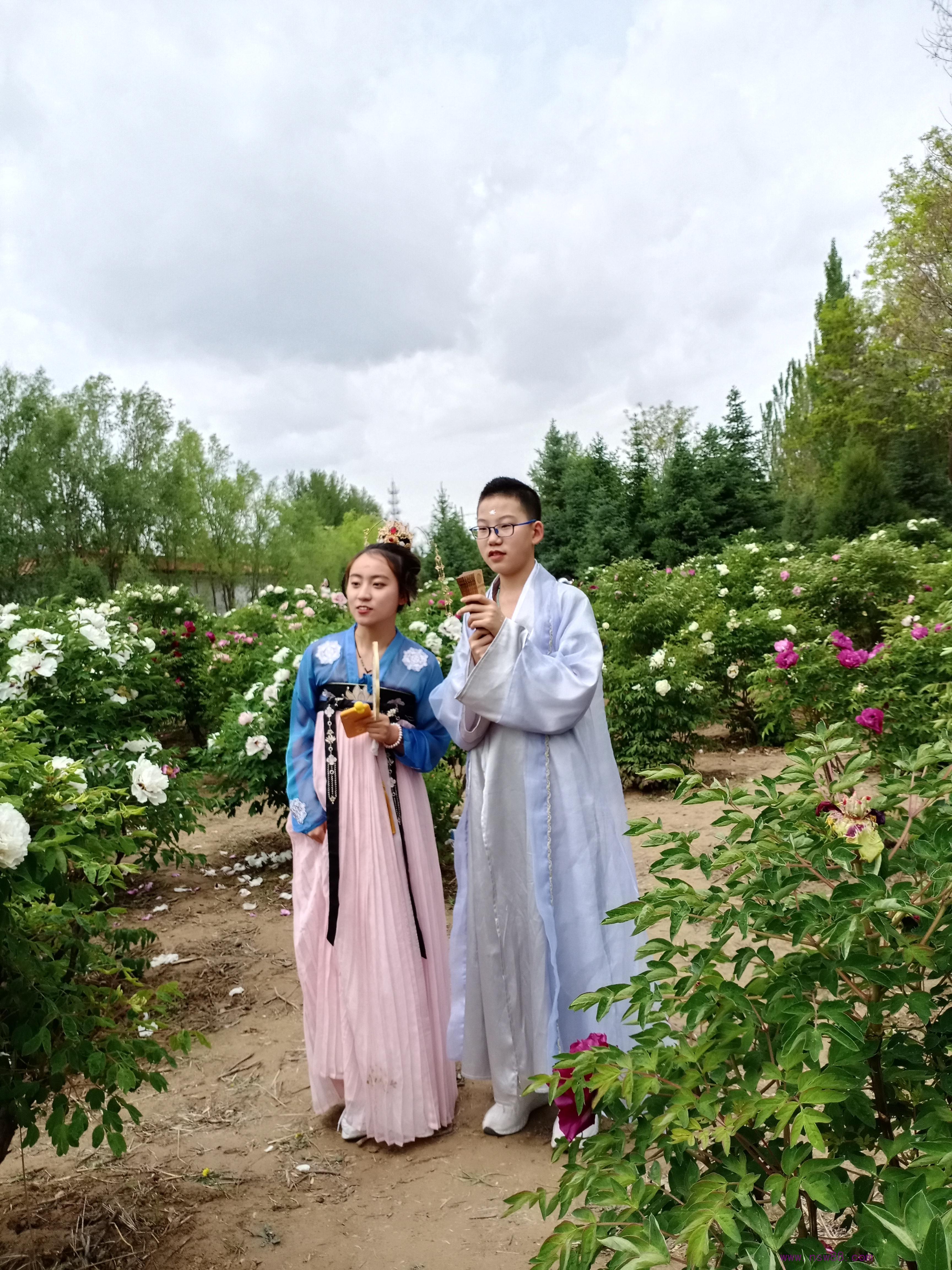 2015年中川牡丹节会图片