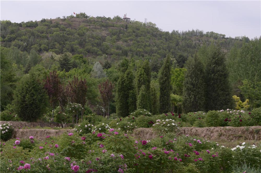 中川苗木绿化基地