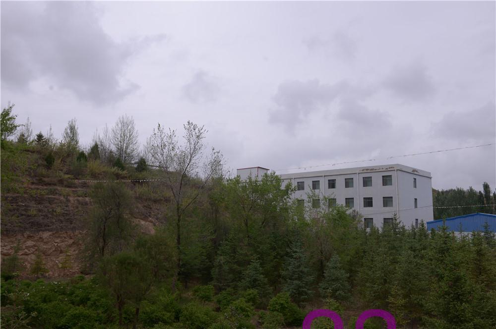 中川苗木实景照