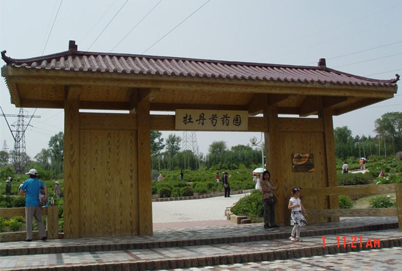 甘肃牡丹生存奇迹再现---哈尔滨森林植物园牡丹园